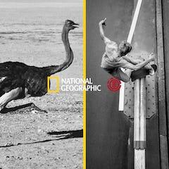 ナショナル ジオグラフィックとELEMENTによるコラボストアが期間限定オープン!